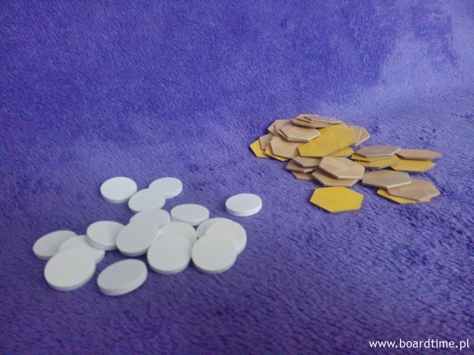 Jaja oraz komórki plastra